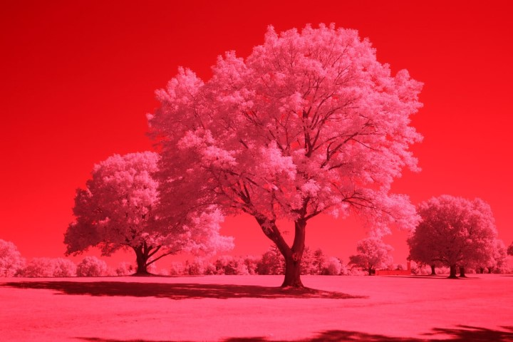 590 Infrared Conversion Filter (Auto White Balance)