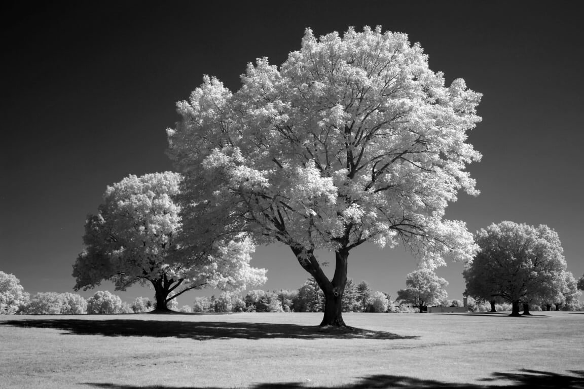 590 Infrared Conversion Filter (Black and White)