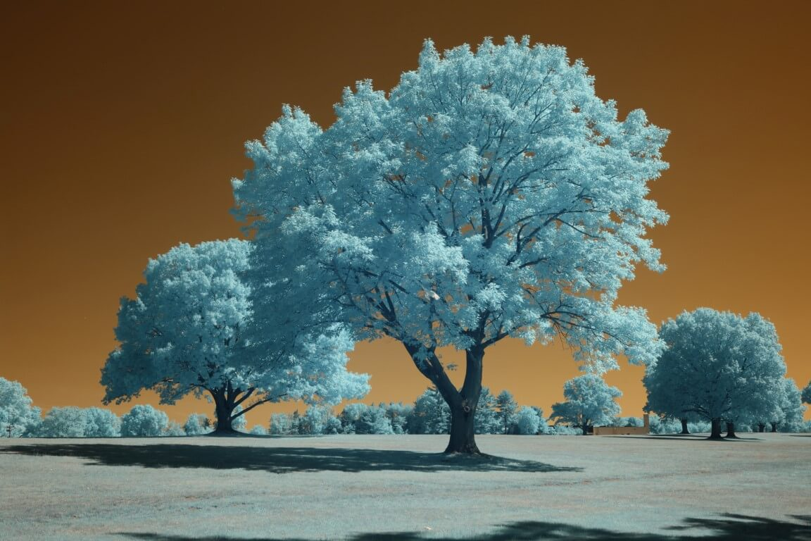 590 Infrared Conversion Filter (custom white balance)