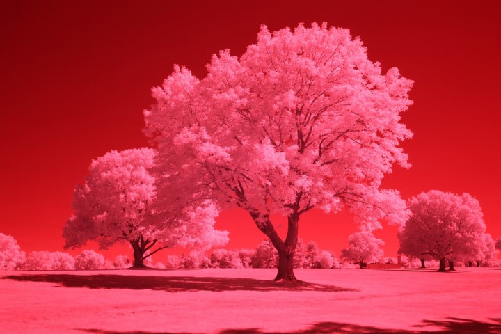 665 Infrared Conversion Filter (Auto White Balance)