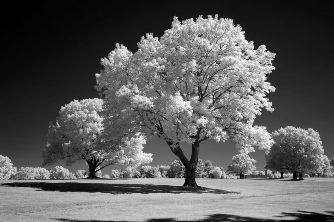 665 Infrared Conversion Filter (Black and White)