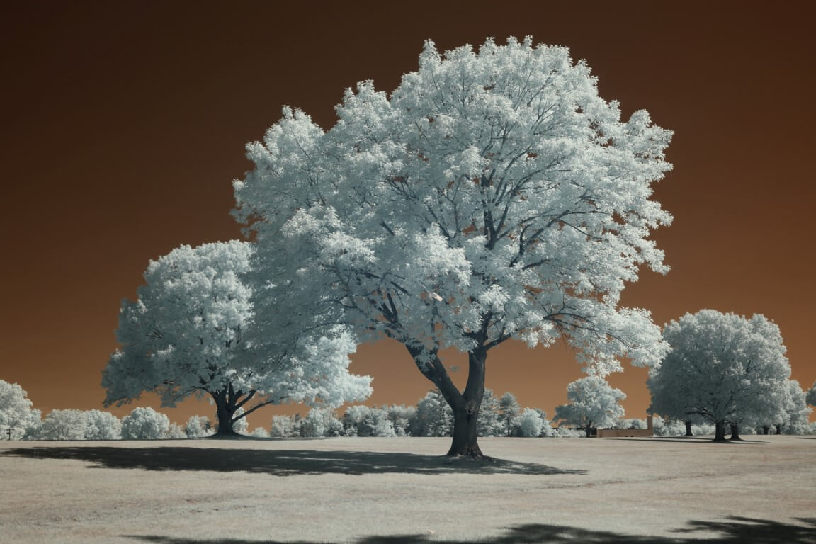 665 Infrared Conversion Filter (custom white balance)