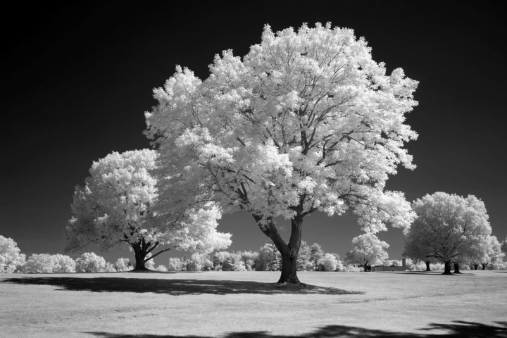 720 Infrared Conversion Filter (Black and White)