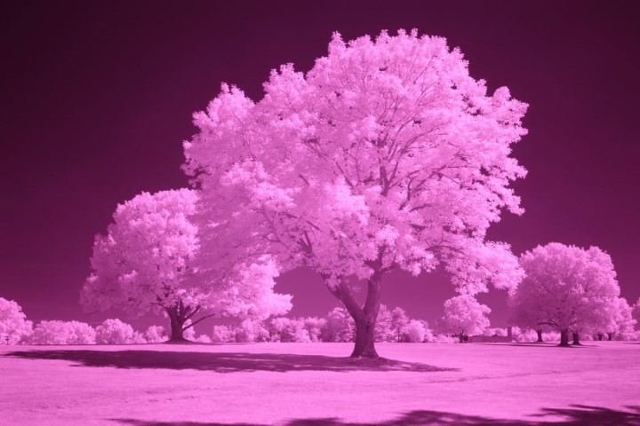 850 Infrared Conversion Filter (Auto White Balance)