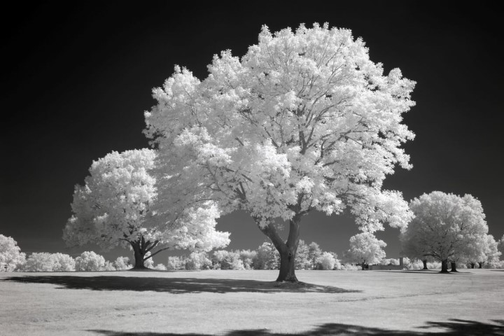 850 Infrared Conversion Filter (Black and White)