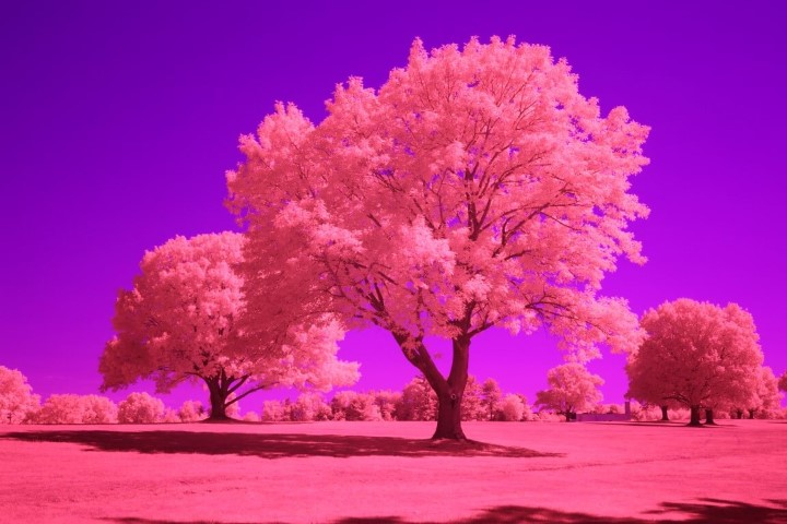 Blue IR Infrared Conversion Filter (Auto White Balance)