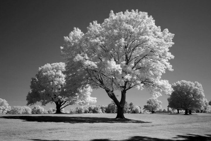 Blue IR Infrared Conversion Filter (Black and White)