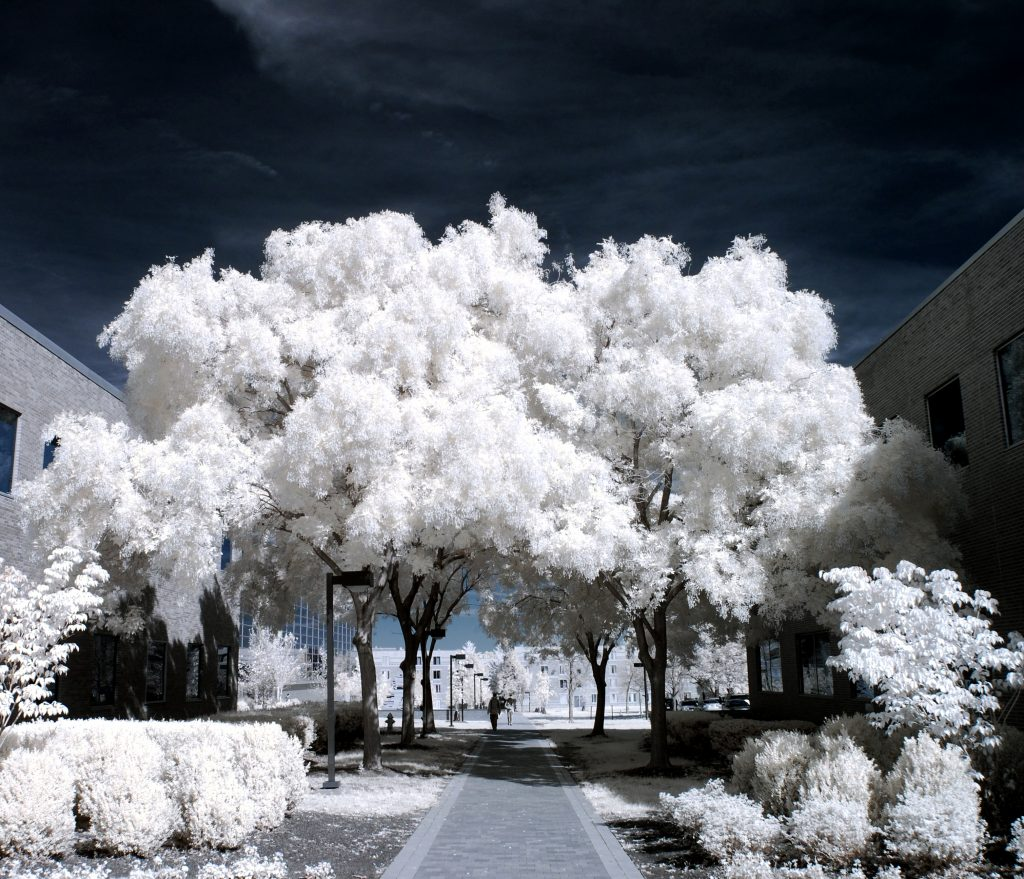 infrared conversion photo by Image from Ilija melentijevic