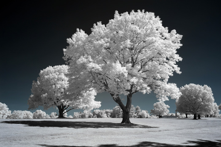 photo after infrared conversion with 720nm Infrared