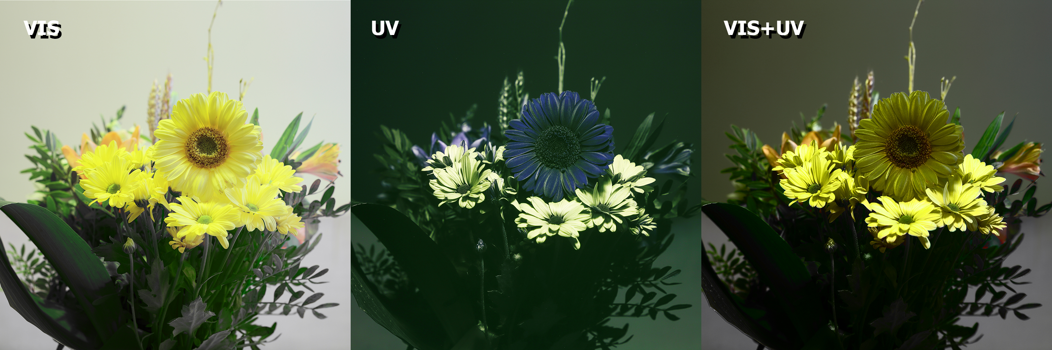 Getting Started with UV Photography - Kolary Vision