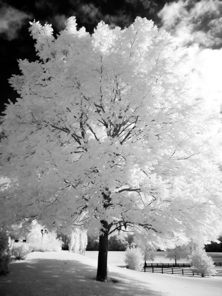 infrared conversion photo by Image from Shawn