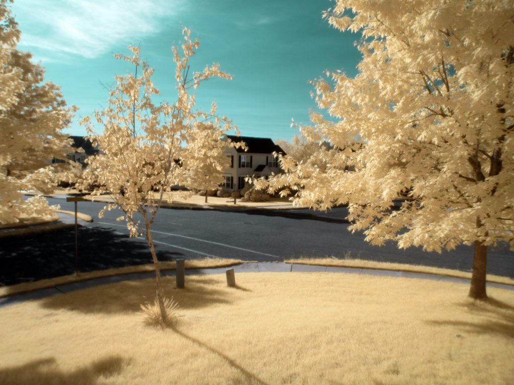 infrared conversion photo by Canon 100 HS 590nm Filter #2