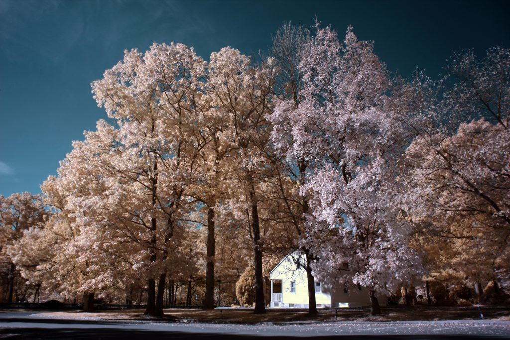 infrared conversion photo by Canon T2I (550D) 590nm Filter