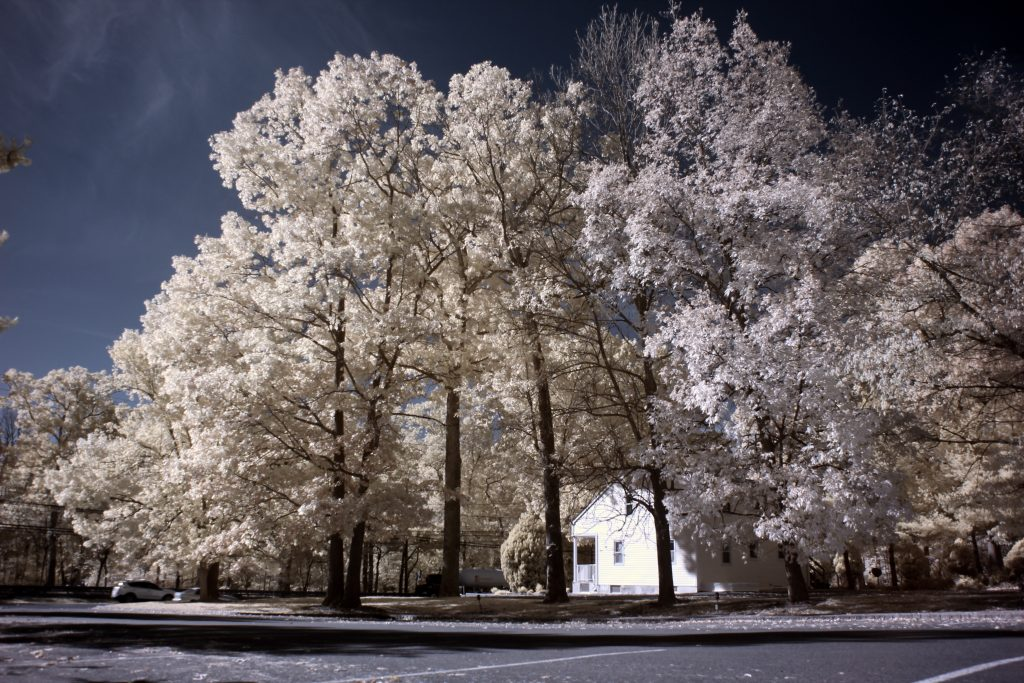 infrared conversion photo by Canon T2I (550D) 665nm Filter