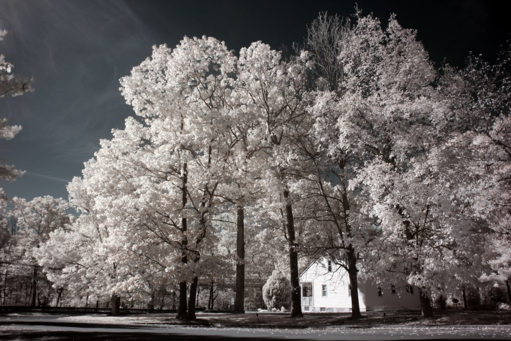 infrared conversion photo by Canon T2I (550D) 720nm Filter