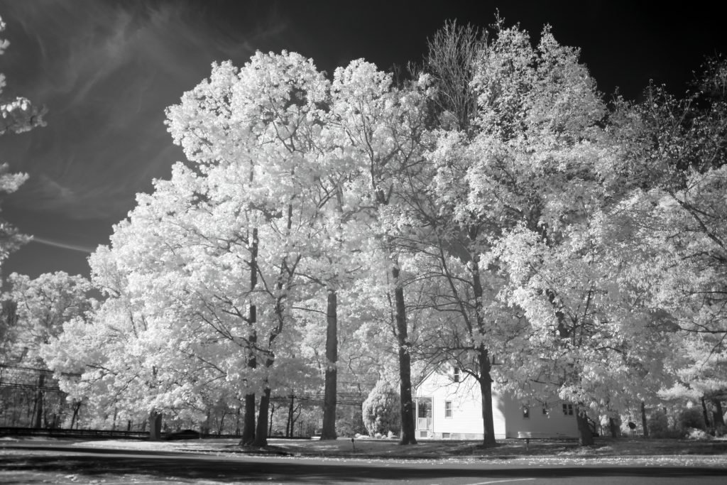 infrared conversion photo by Canon T2I (550D) 850nm Filter