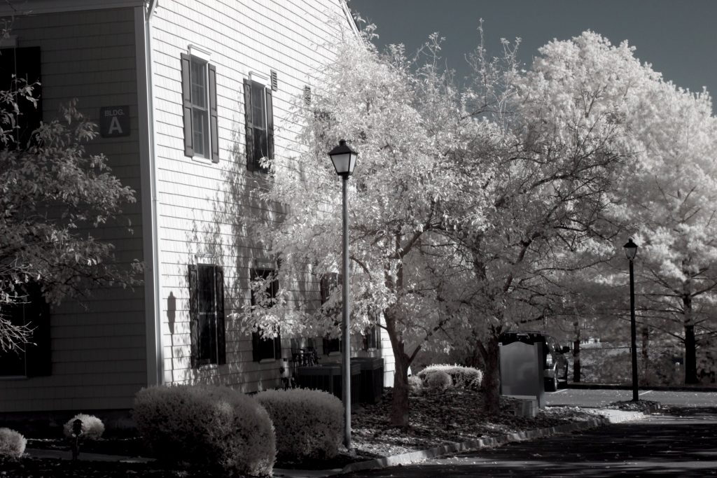 infrared conversion photo by Canon 7D 720nm Filter