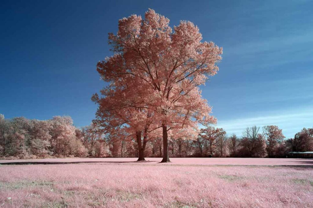 infrared conversion photo by Canon EOS R 550nm