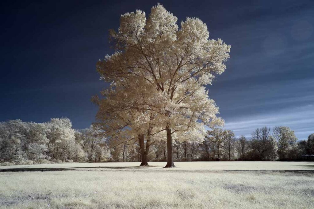 infrared conversion photo by Canon EOS R 665nm
