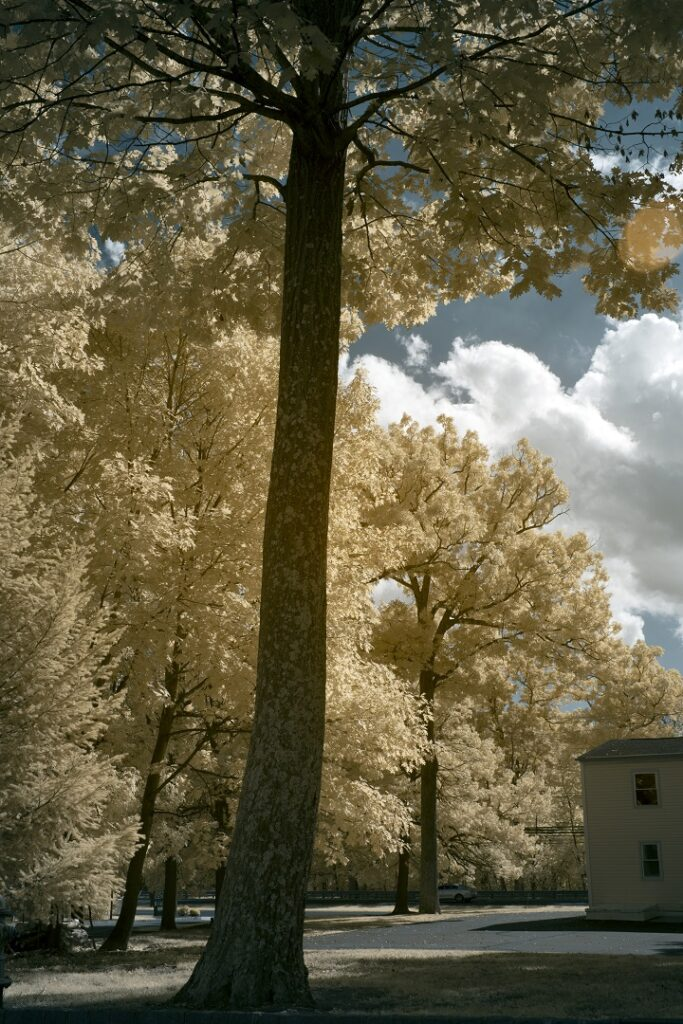 infrared conversion photo by Nikon Z7 665nm