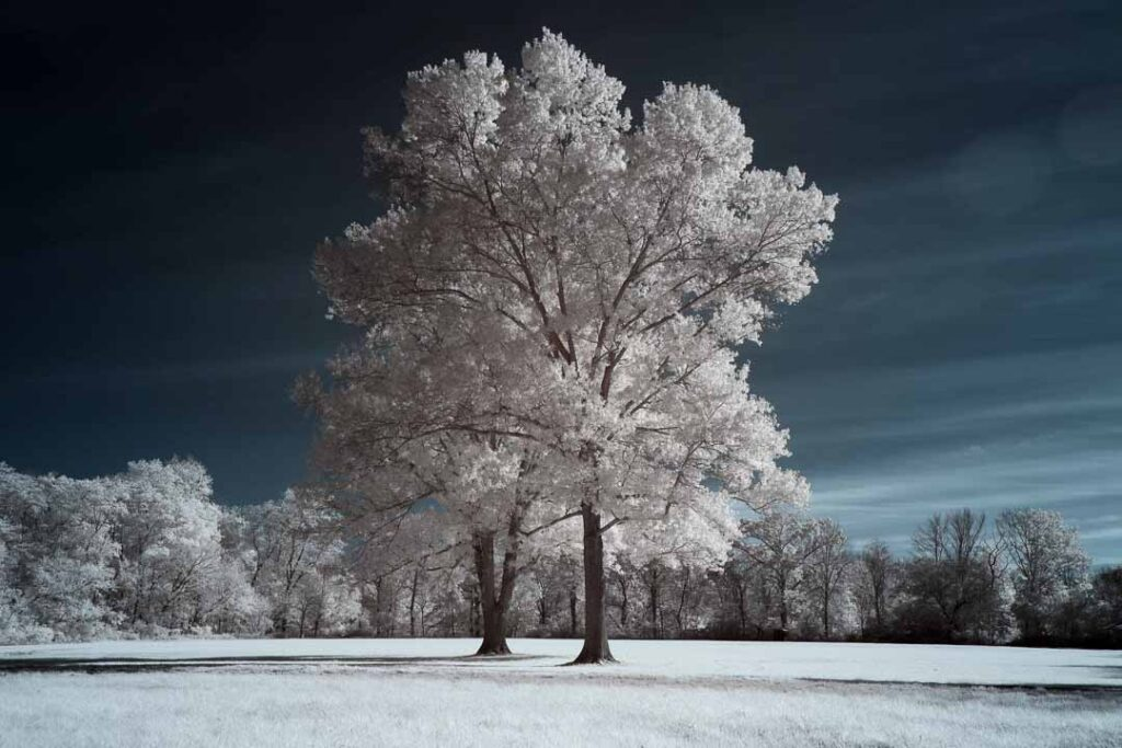 infrared conversion photo by Canon EOS R 720nm