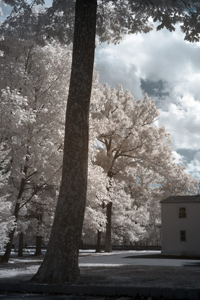 infrared conversion photo by Nikon Z7 720nm