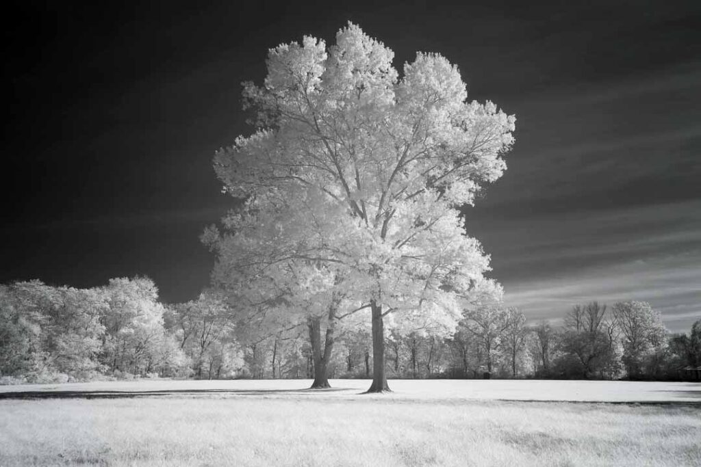infrared conversion photo by Canon EOS R 850nm