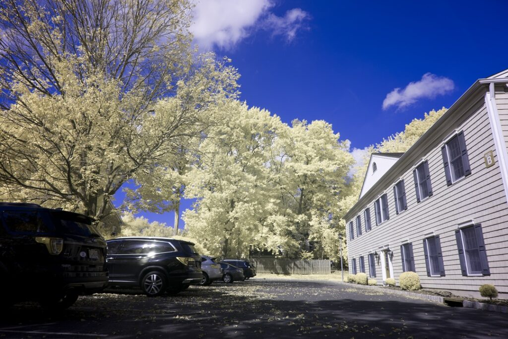 infrared conversion photo by Nikon Z7 Blue IR