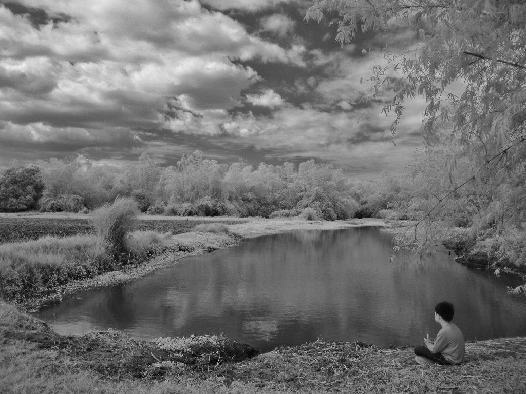 infrared conversion photo by Alone In Nature