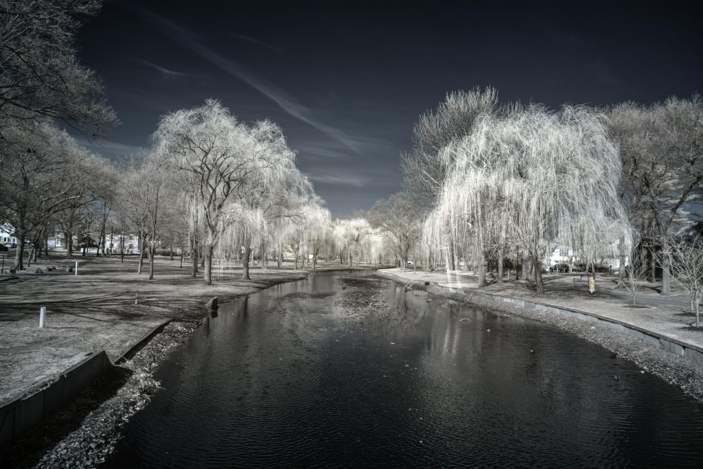 infrared conversion photo by Hendrickson Park
