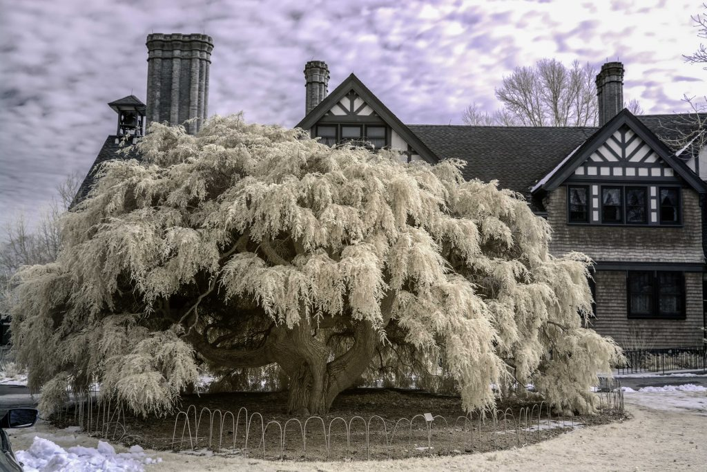 infrared conversion photo by Bayard Cutting Arboretum Manor House