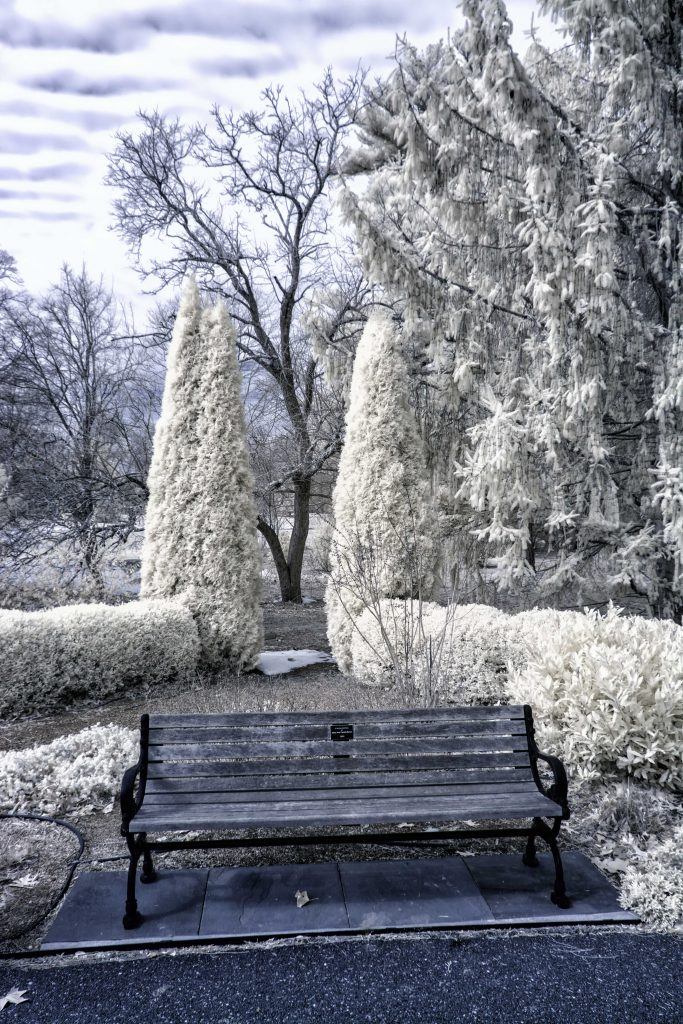 infrared conversion photo by Bayard Cutting Arboretum Bench