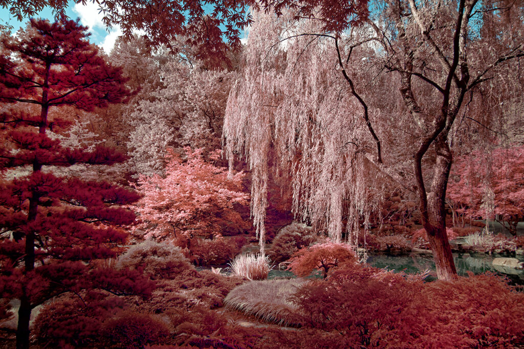 Kolari Vision infrared conversion 550nm Nikon DSLR and Mirrorless Nikon D800e