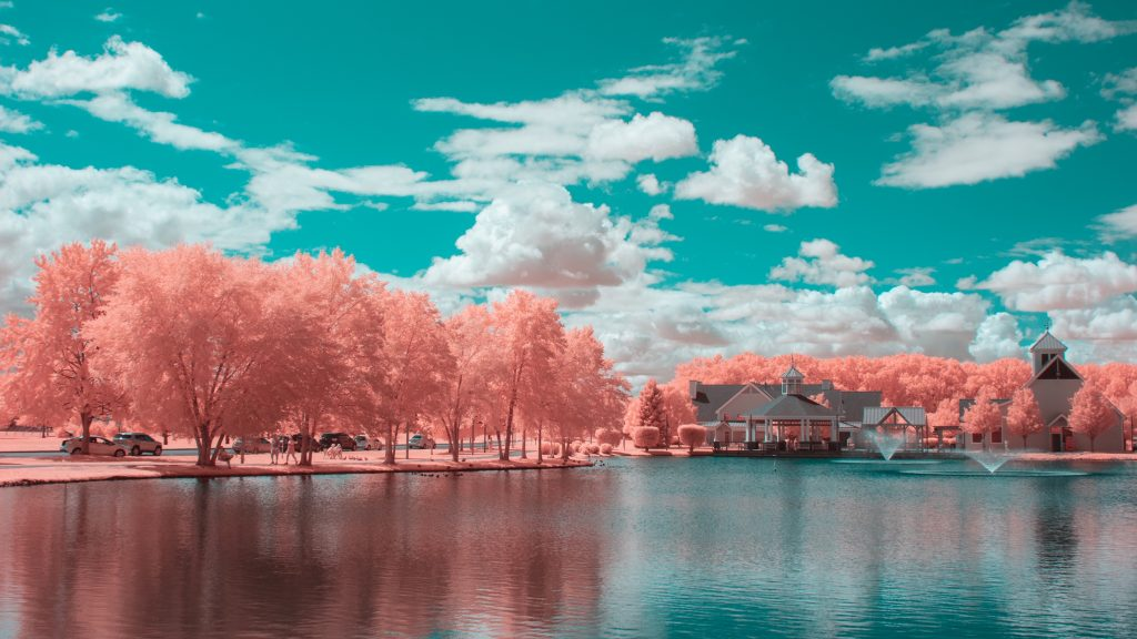infrared conversion photo by Coral Park