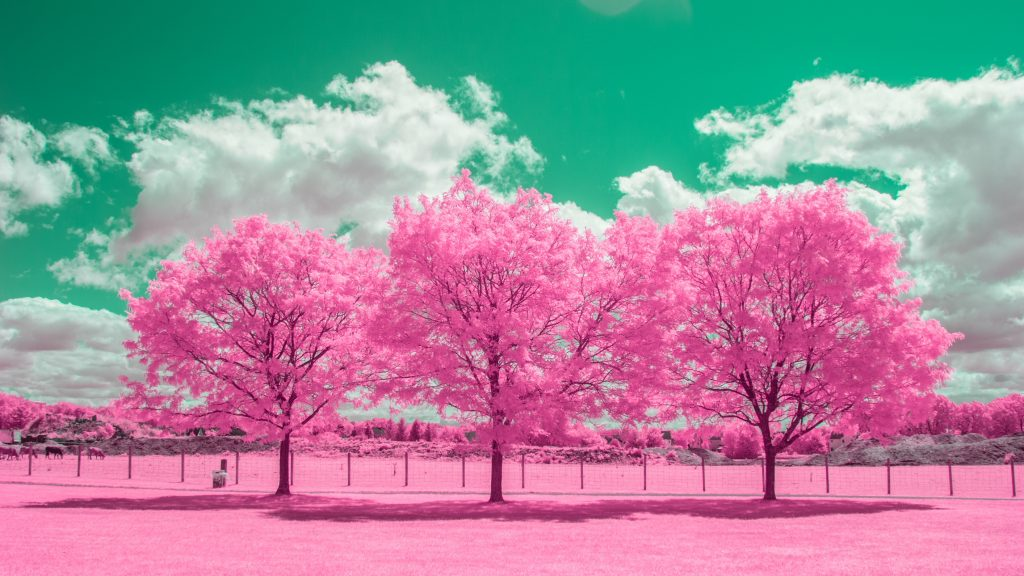 infrared conversion photo by Bubblegum Trees